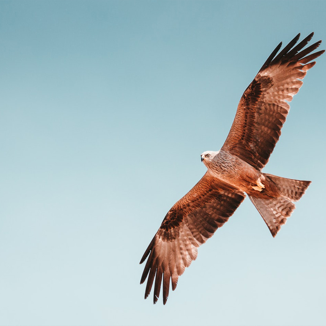 Nc High Country Fall Hawk Migration