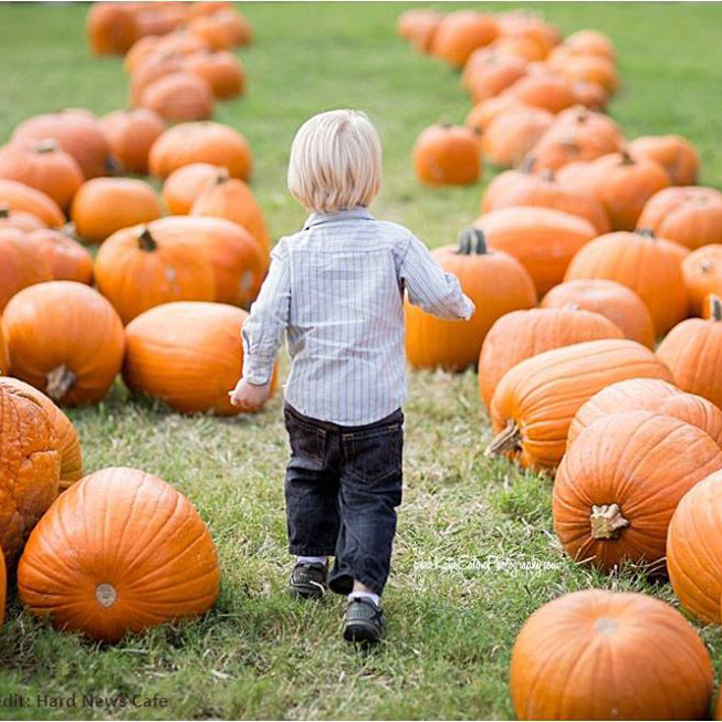 NC High Country Pumpkin Patches and Corn Mazes 2019