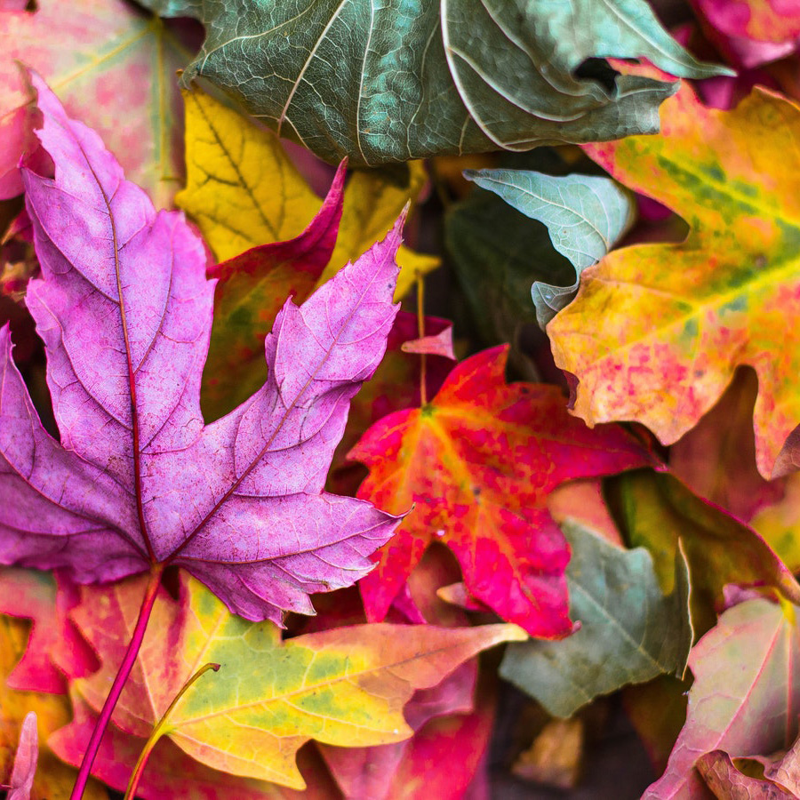 NC High Country Fall Color Guide