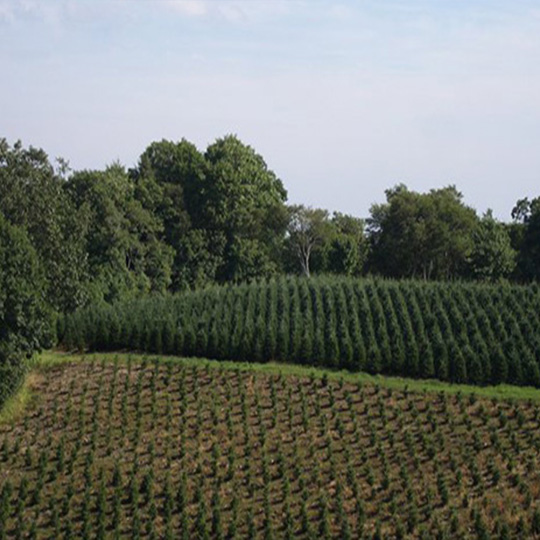 NC High Country Choose & Cut Tree Farm FAQ