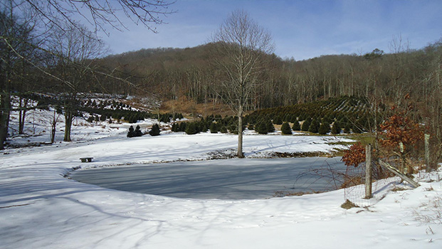 Cornett-Deal Christmas Tree Farm Boone NC